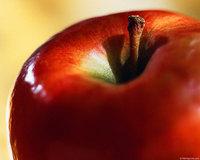 apple_stem