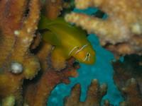 Underwaterworld in the Red Sea (Egypt)