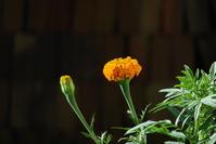 anaranjada