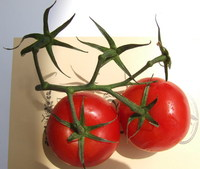"""TOMATOES WITH THEIR """"STARS"""