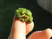 Frog on my Finger