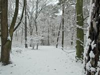 idyllic winter forest