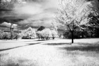 Infrared spring