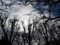 mistic trees