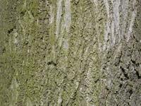 bark of a tree 2