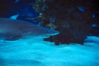 respect the shark IV