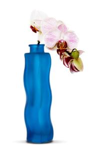 orchidpot