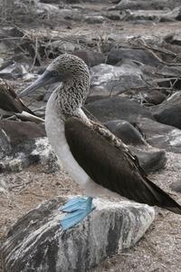 Galapogus Islands 5