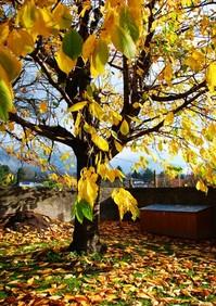 Golen Tree