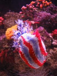 Patriotic Sea Creature