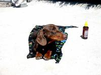 Dog getting a tan
