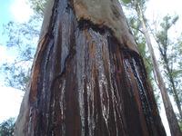 Texture - tree 2