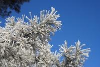heavy frost 2