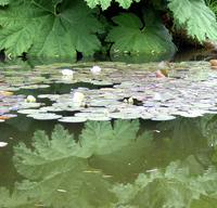lily_pad_reflecting_pool