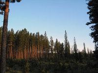 Mountain Tree Morning Light