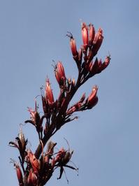 Flax 9