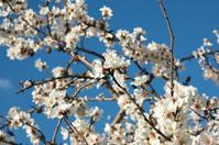 mallorca spring
