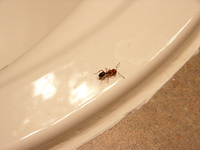 Ant on a Sink