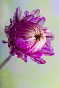 Dry Flowers 1