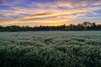 Sunrise on Fields