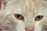 bitza cat