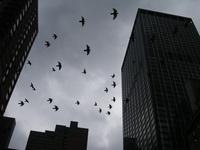 City Birds