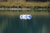 Balls in Lake