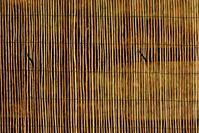 Bamboo Photo File
