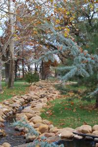 Fall Evergreen Scene
