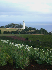 Lighthouse over flower fields