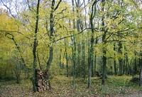 Underwood in autumn