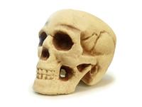 Halloween Skull 1