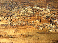 rotten wood 11
