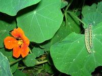 caterpillar 3