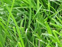 [ grass ]