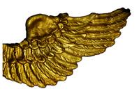 Golden Wing on White