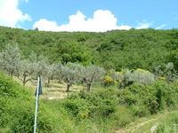 Assisi Landscapes 1