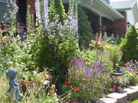 garden in July, 1