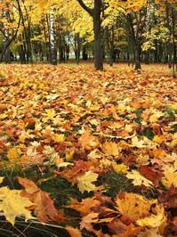 autumn in park 1