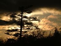 tree at sunrise - Mount Rogers