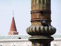 Pigeon on a column