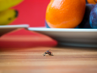 Bug n Fruit