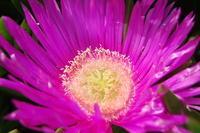 flower on Elba 2