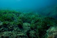 Underwater landscape 5
