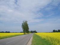 yellow fields 2