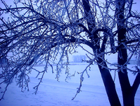 Blue Morn