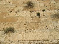 Holy wall - Israel Praying 2