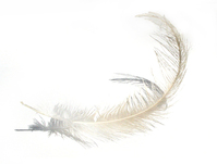 Feather 607
