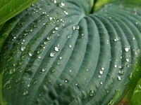leaf_rain_ 3