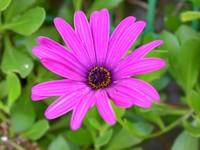 Portuguese Flower 1